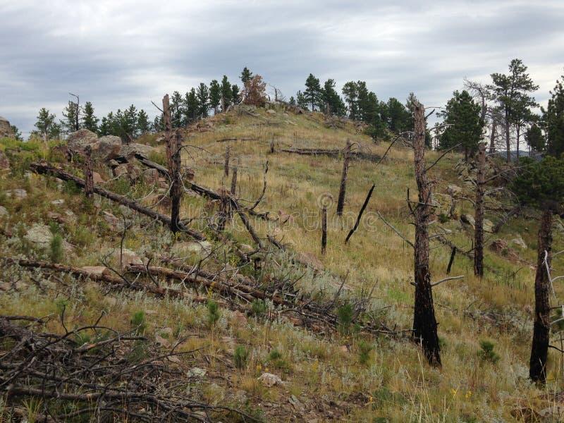 Взгляд горного склона леса и прерии стоковое фото rf