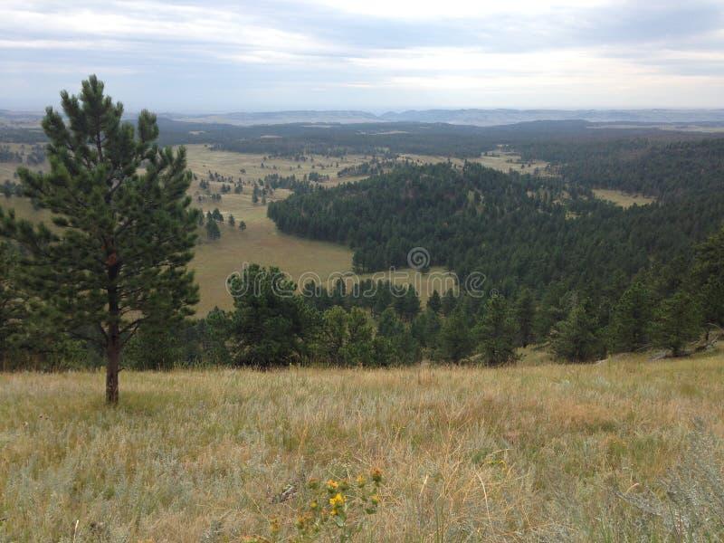 Взгляд горного склона леса и прерии стоковые изображения rf