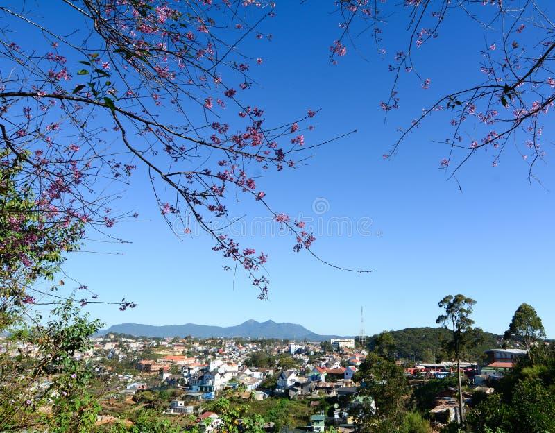 Взгляд городка с вишневым цветом в Dalat, Вьетнаме стоковое изображение rf
