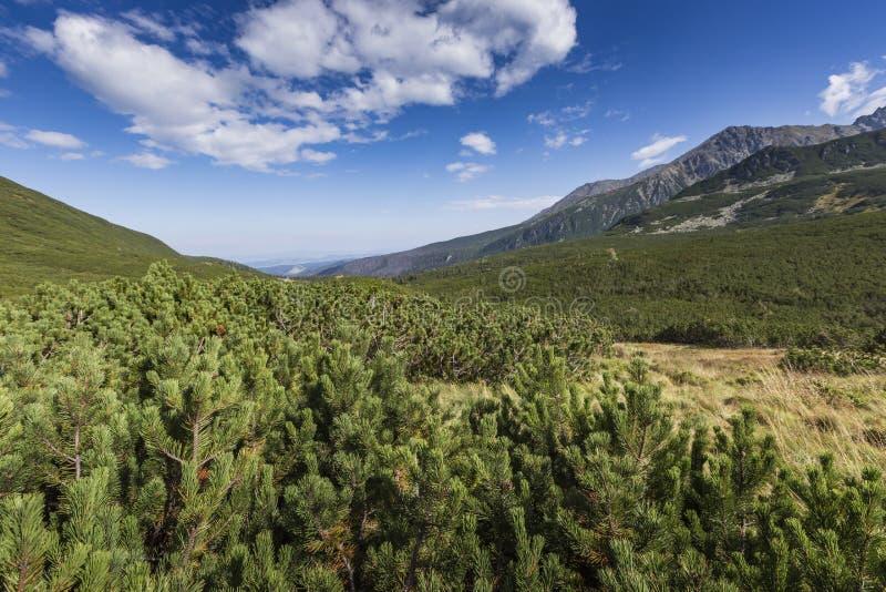 Взгляд гор Tatra от тропы Польша европа стоковое изображение rf