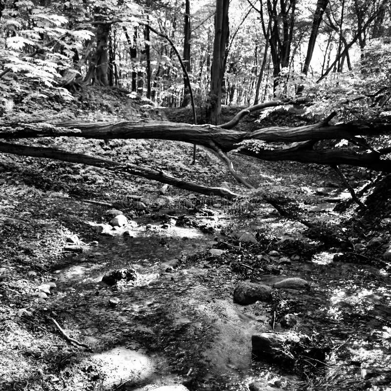 Взгляд леса художнический в черно-белом стоковые изображения
