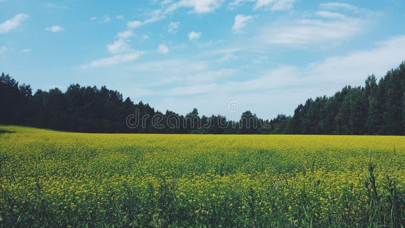 взгляд лета травы поля угла широко стоковые фото