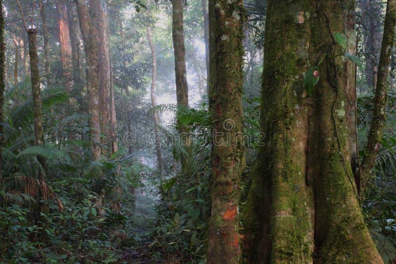 Взгляд джунглей/Суматры/Индонезии стоковая фотография