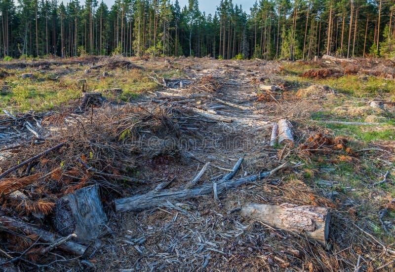 Взгляд журналов валить деревьев стоковое изображение