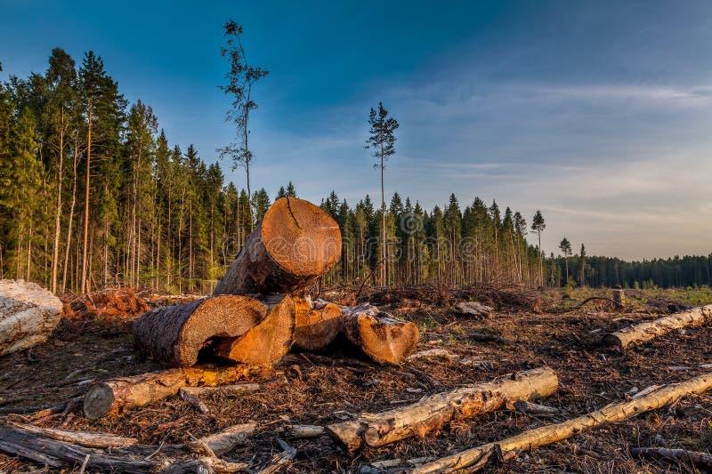Взгляд журналов валить деревьев стоковое фото rf