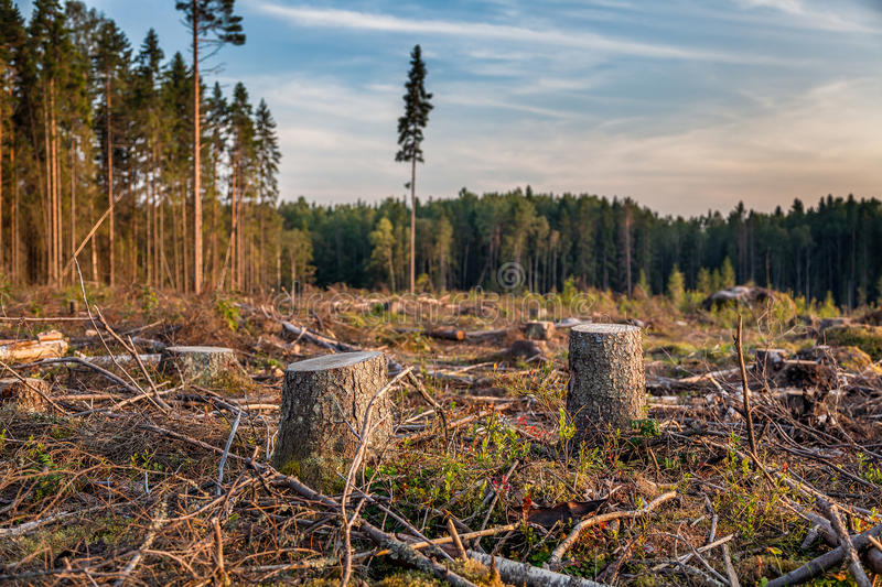 Взгляд журналов валить деревьев стоковая фотография
