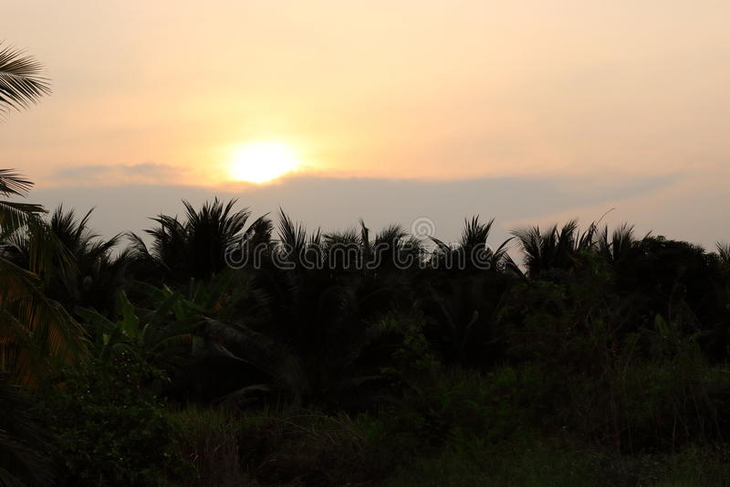Взгляд захода солнца с группой в составе sihouette предпосылка кокосовой пальмы стоковое изображение rf