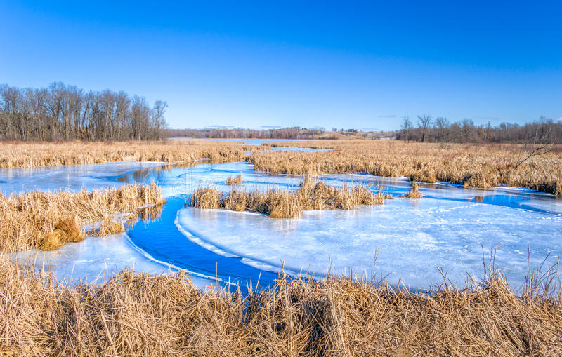 Взгляд зимы озера волк стоковые фотографии rf