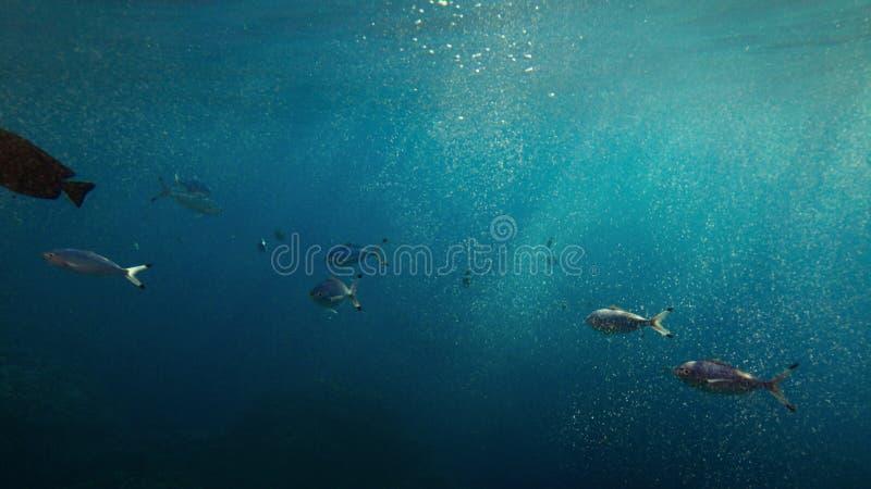 Взгляд иллюминатора окна подныривания нижний тропических рыб плавая в голубом океане стоковые изображения