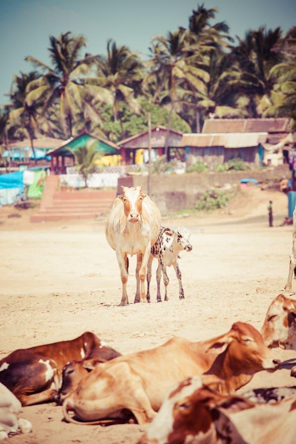Взгляд красивого тропического пляжа Vagator, Goa, Индии стоковое изображение rf