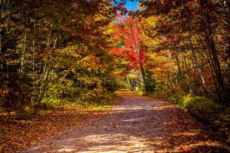 Взгляд красочных деревьев во время сезона осени стоковое изображение rf