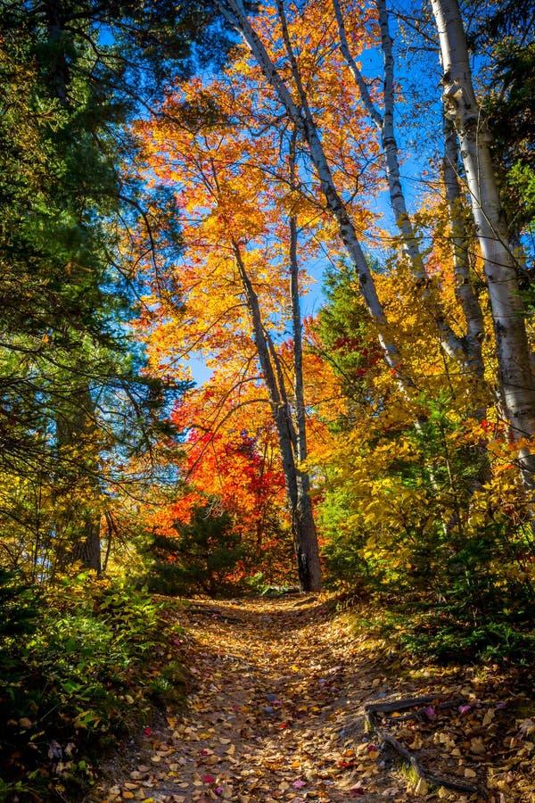Взгляд красочных деревьев во время сезона осени стоковые изображения rf