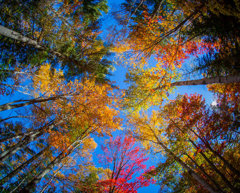 Взгляд красочных деревьев во время сезона осени стоковое фото rf
