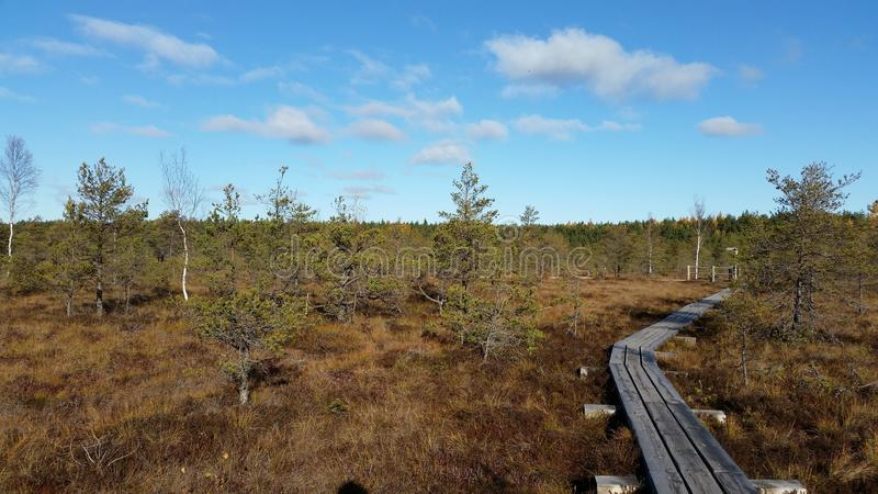 Взгляд к лесу на болотах стоковое фото