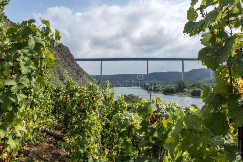 Взгляд моста от винодельческого региона Winningen wineyard стоковое фото