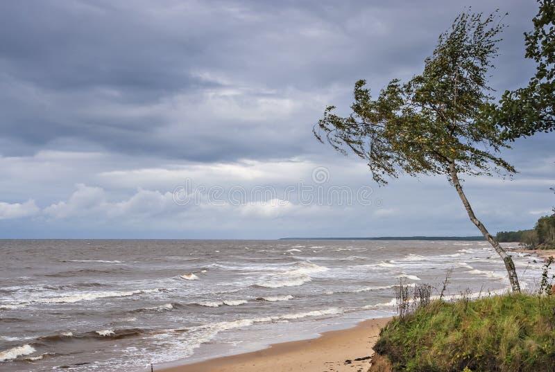 Взгляд на бурном Балтийском море, Vidzeme, Латвии стоковые фотографии rf