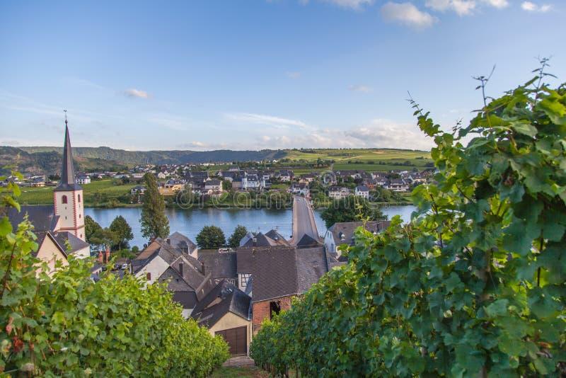 Взгляд на Мозель и виноградниках в Германии Piesport стоковые фото