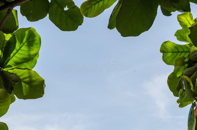 взгляд на небе и листьях на пляже стоковое фото rf