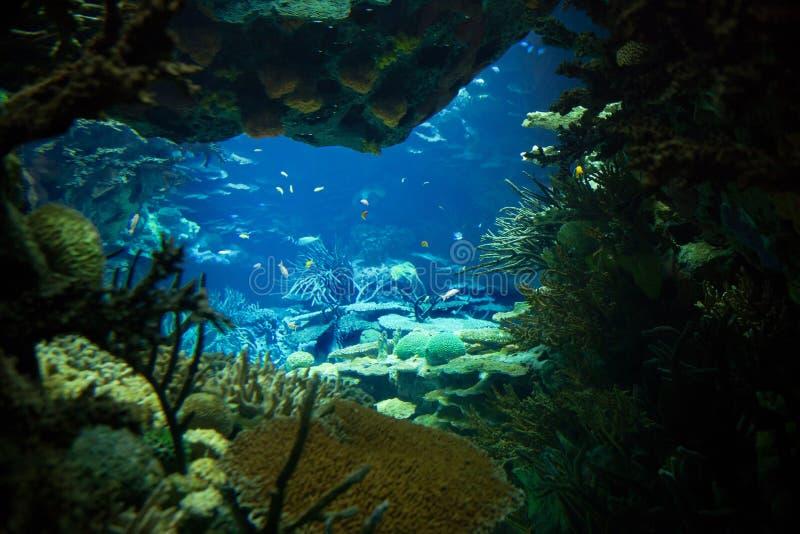 Взгляд океана, под водой. стоковая фотография rf