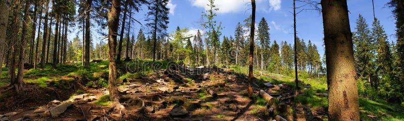 Взгляд от леса в горах Beskidy, Польши стоковое изображение