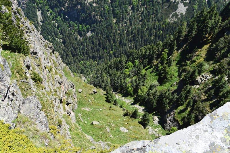 Взгляд от края горы вниз к утесам вертикали и зеленым соснам стоковая фотография