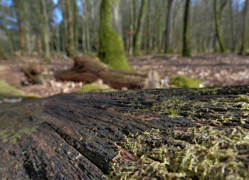 Взгляд от пола леса стоковые изображения