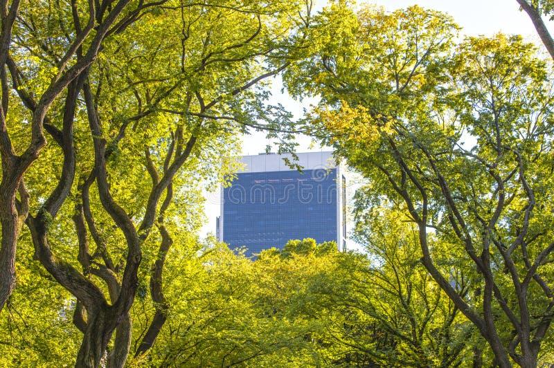 Взгляд от Central Park Нью-Йорка к skyscrappers стоковые фото