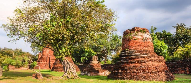 Взгляд пагод азиатской религиозной архитектуры старых в парке Wat Phra Sri Sanphet историческом, провинции Ayuthaya, Таиланде стоковые фотографии rf