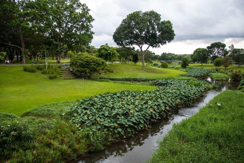 Взгляд парка растительности на день облака стоковое изображение rf