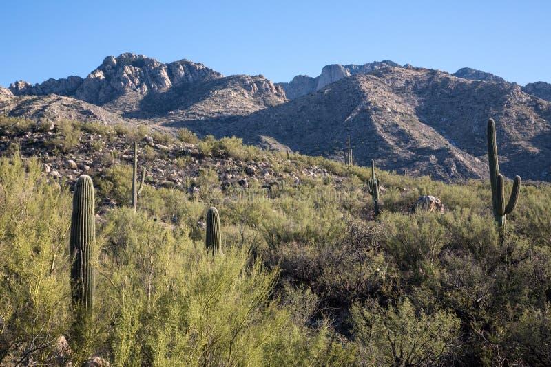 Взгляд парка штата Каталины стоковые изображения rf