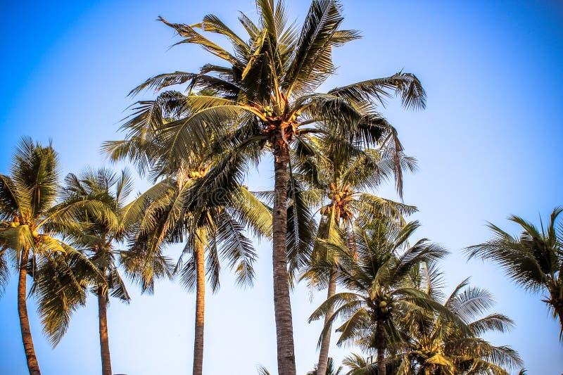 Взгляд пальм против неба стоковая фотография rf