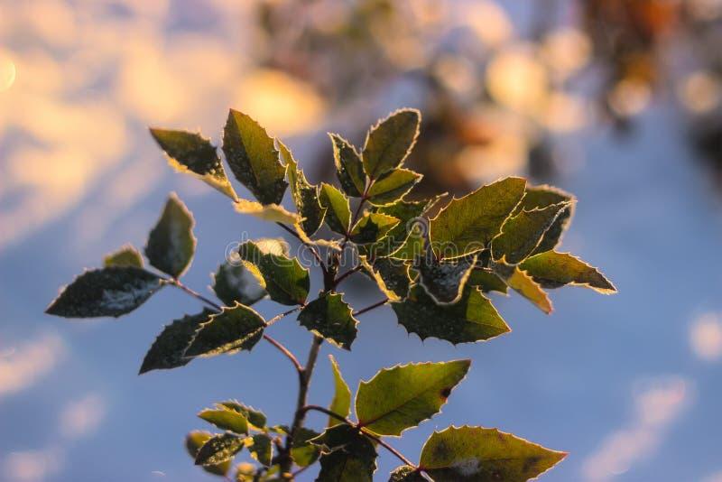 Взгляд перспективы на зеленых листьях зимы стоковая фотография