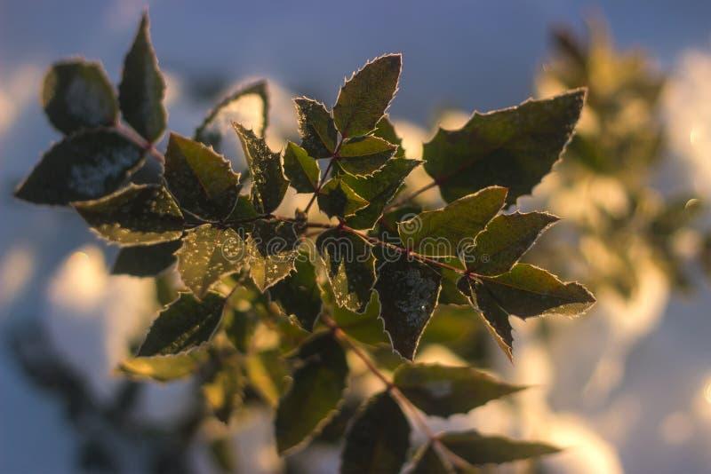 Взгляд перспективы на зеленых листьях стоковое фото rf