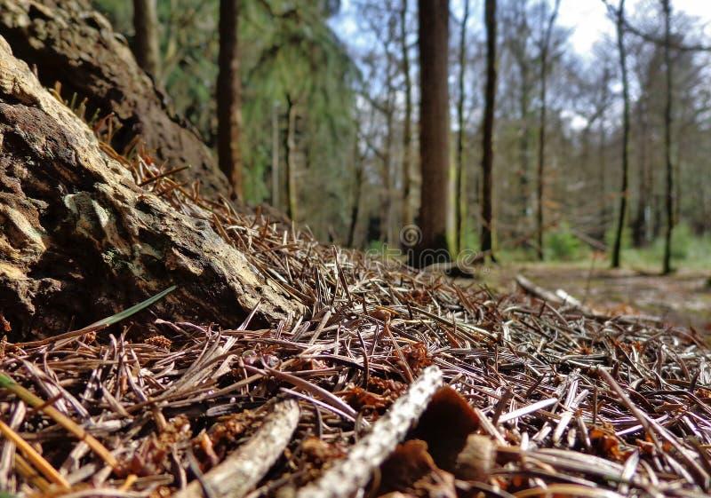 Взгляд пола леса стоковые изображения rf