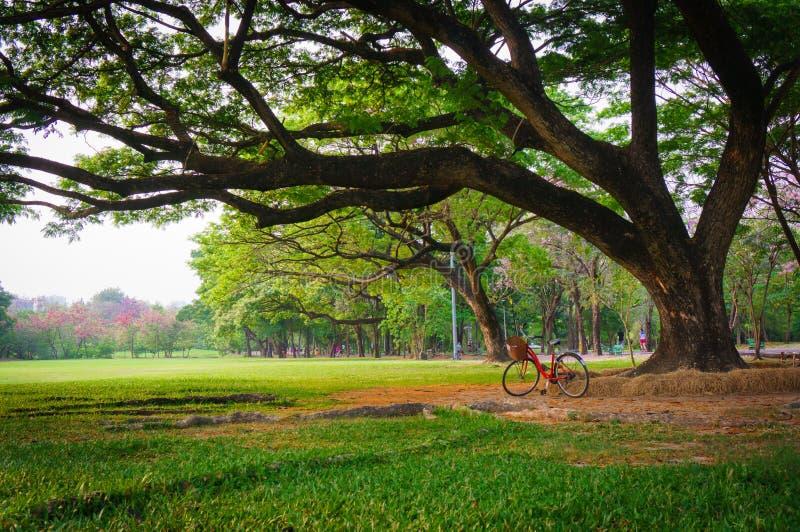Взгляд под большим деревом с парком велосипеда публично, стиль виньетки стоковое изображение rf