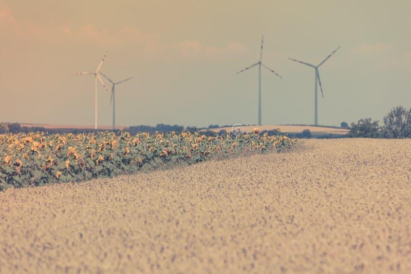 Взгляд полей хлопьев и солнцецветов стоковые фотографии rf