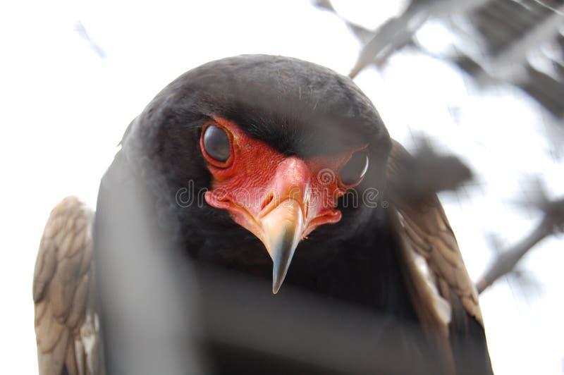 Взгляд птицы стоковое фото rf
