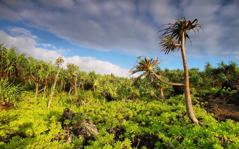 Взгляд пышной растительности пальм в парке штата Waianapanapa стоковые изображения rf