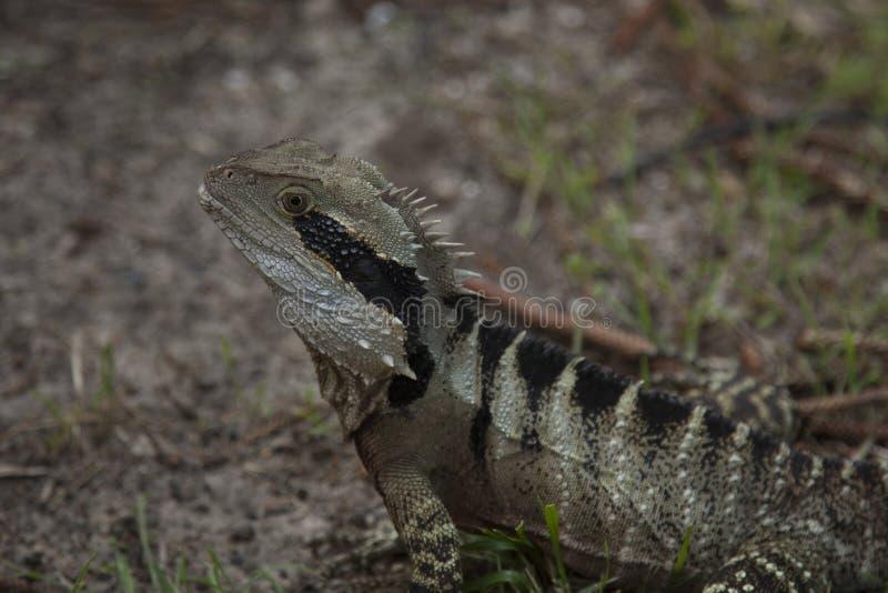 Взгляд дракона стоковое изображение