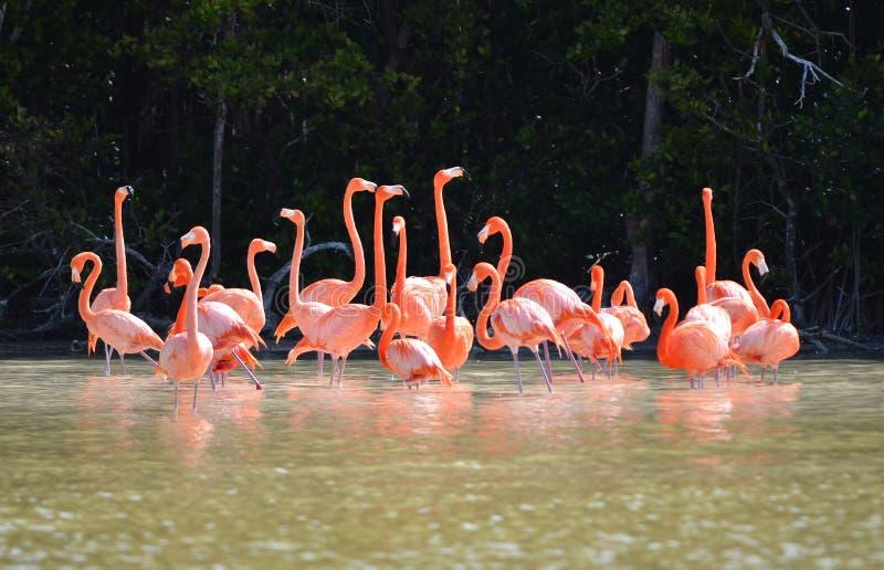 Взгляд розовых фламинго стоковые изображения rf