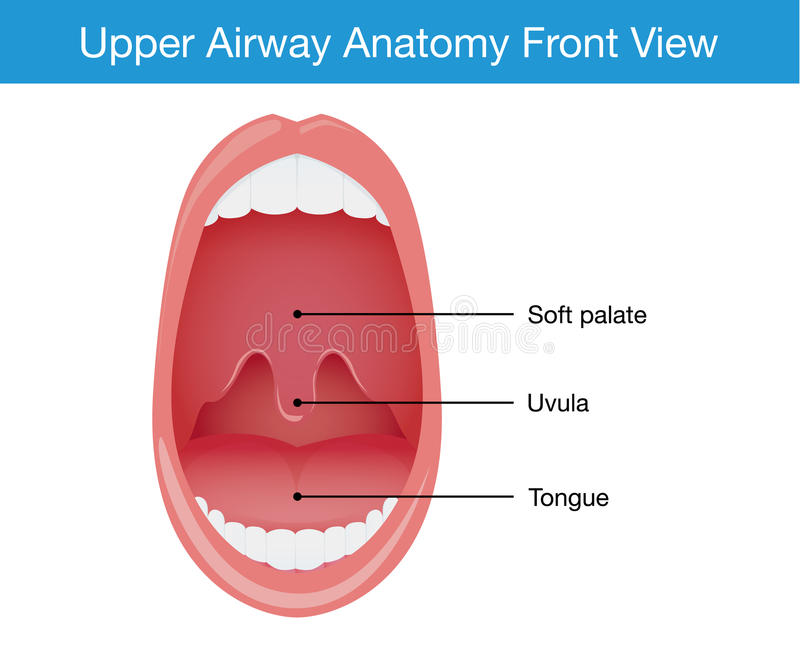 Взгляд сверху верхней анатомии человека авиалинии иллюстрация вектора