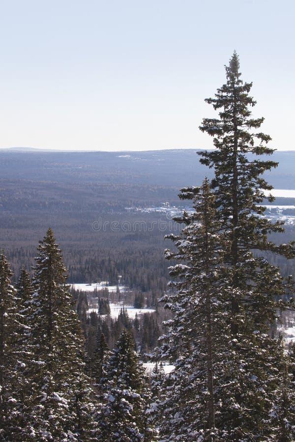 Взгляд сверху леса ели зима температуры России ландшафта 33c января ural стоковая фотография