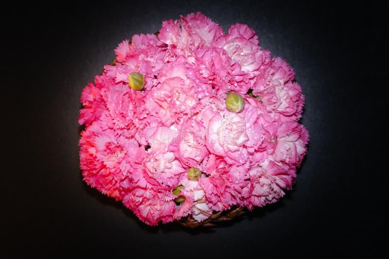 Взгляд сверху и конец вверх отображают на красивой яркой розовой гвоздике с черной предпосылкой стоковые изображения