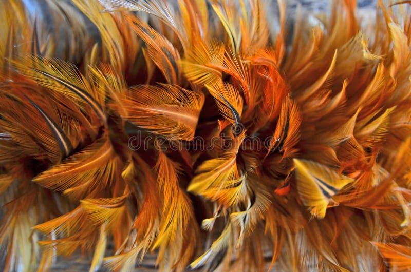 Взгляд сверху оранжевого и желтого пера стоковые фотографии rf