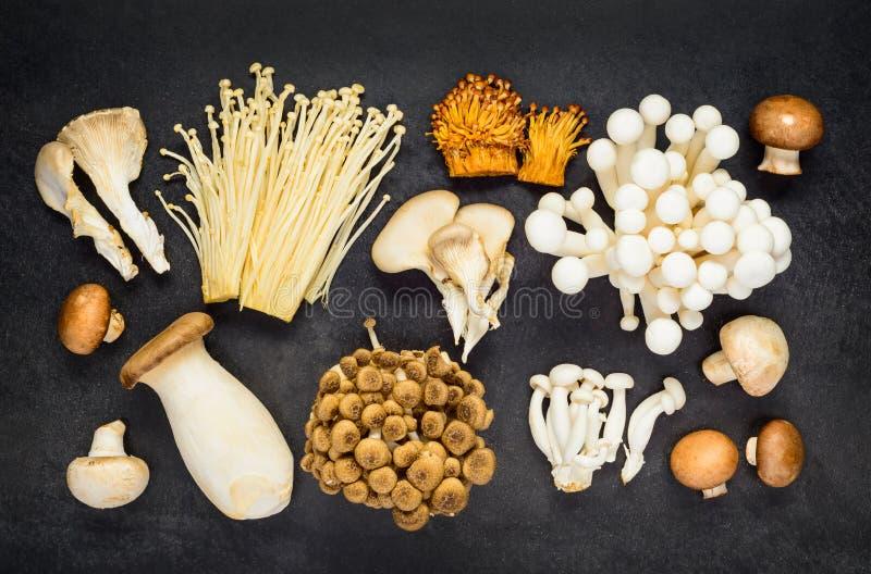 Взгляд сверху различных грибов стоковое изображение rf