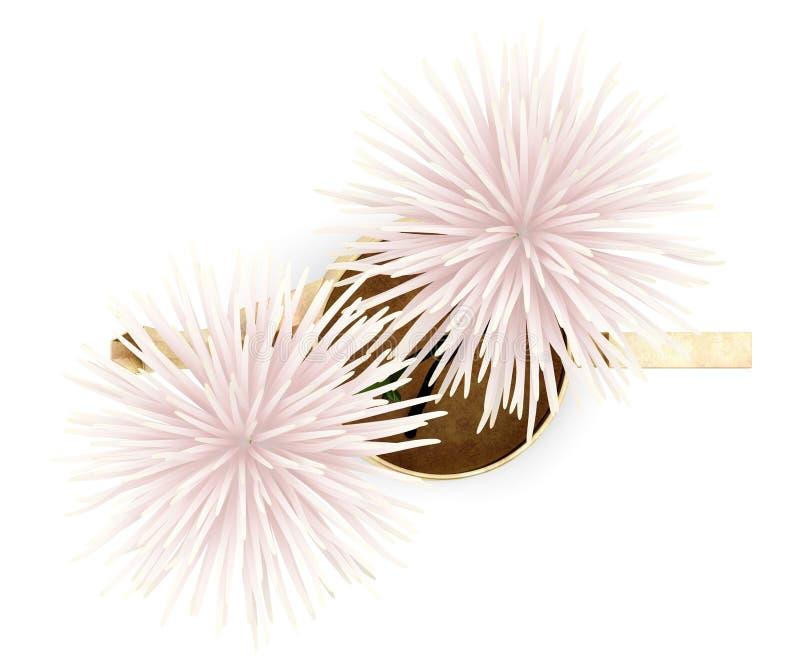 Взгляд сверху розовых цветков в чайнике изолированном на белизне иллюстрация штока
