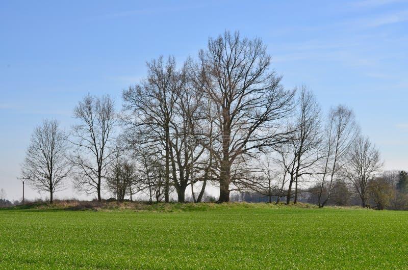 Взгляд сельской местности весны, южной Богемии стоковое изображение