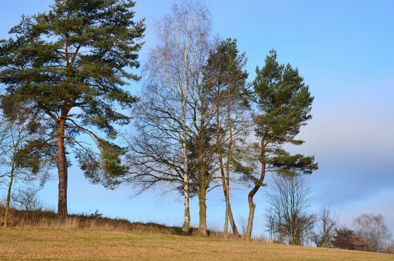 Взгляд сельской местности зимы, южной Богемии стоковое фото