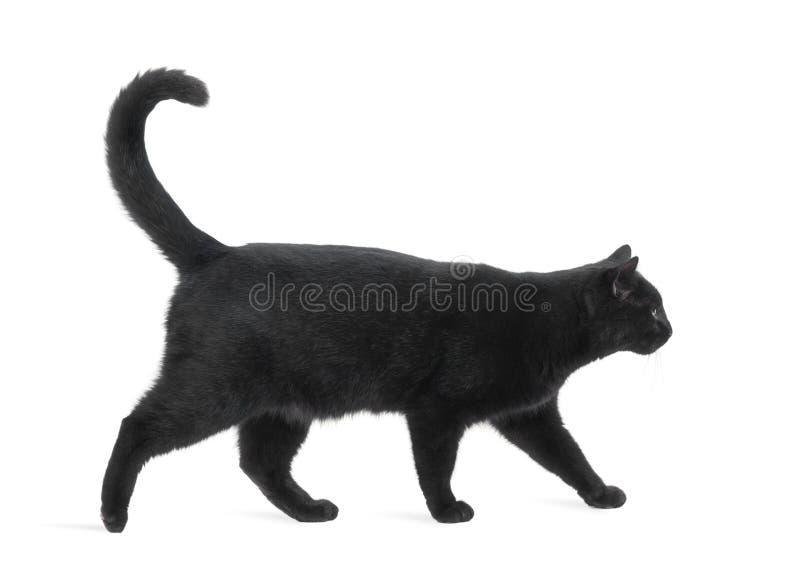 Взгляд со стороны гулять черного кота стоковое фото rf