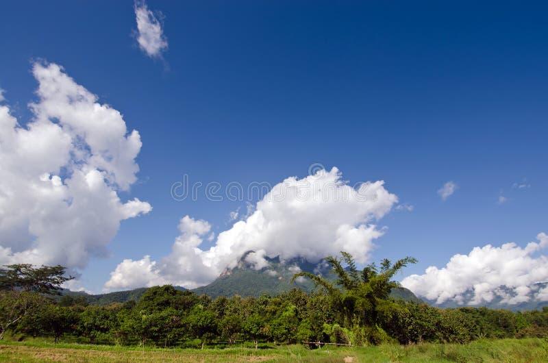 Взгляд травы, горы и облачного неба Chiangmai Таиланда стоковое фото rf